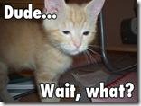 dude cat