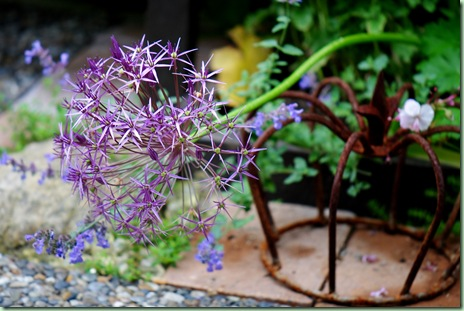 Allium christophii albopilosum