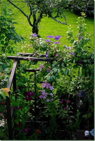 gräsmattan och trädet i baksgrunden tillhör min granne, säger något om storleken på min trädgård..