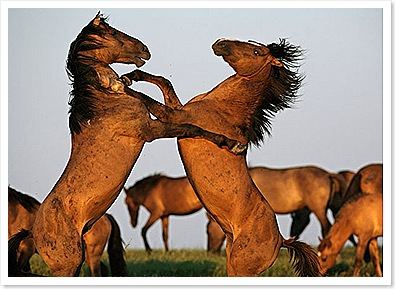 Cabalos