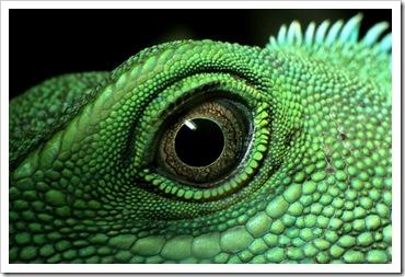 O ollo do dragón