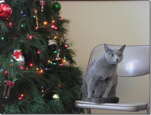 Christmas Tree 2008 067