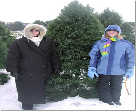 Christmas Tree 2008 003