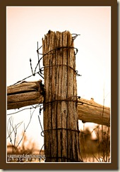 Wired Fence Post