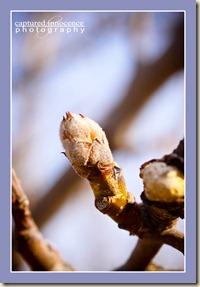 Spring Bud.jpg