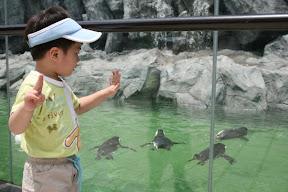 野生動物園絕非浪得虛名,連企鵝也放戶外曬日光浴…真讓人嘆為觀止。