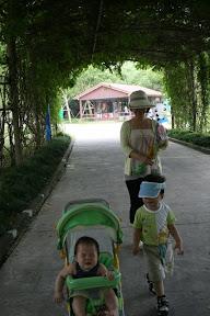漫步綠色隧道,妹妹感動無法名狀,不自禁潸然落淚