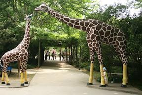 在上海看的第二對長頸鹿,抱上一腳朝拜一下是一定要的。