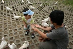 沒見一隻鴿子停在祐祐身上,因為祐祐…怕…卒仔。
