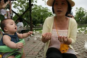 吃不到乳鴿…媽媽給我吃點飼料好了。