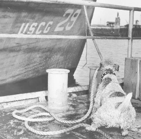 scheepshond pete (us coastal guard)