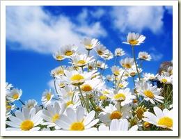 May Blog Hop daisies