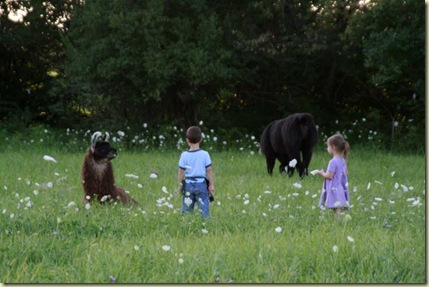 pasture play2