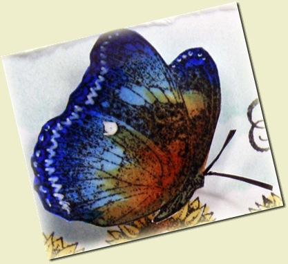 f4a24 butterfly