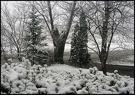 spring snow 1