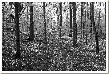 karlskrona forest black