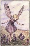 the wild thyme fairy