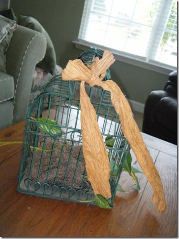 before birdcage