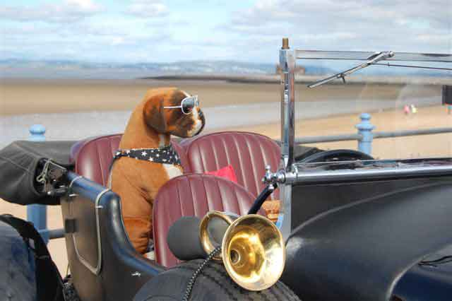 morecambefestival2009_dog.jpg