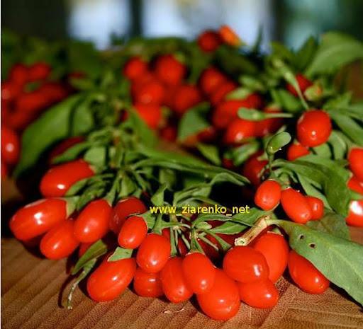 JAGODY GOJI, Kolcowój chiński (Lycium chinense))