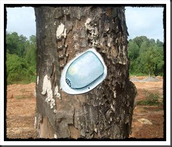 Jack_fruit_tree_bark