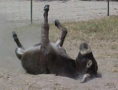 donkey-776593