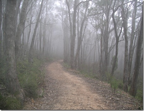 Mt Lofty Trail in the clouds