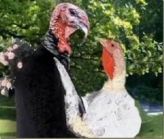 love turkeys