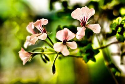 drive-blossoms
