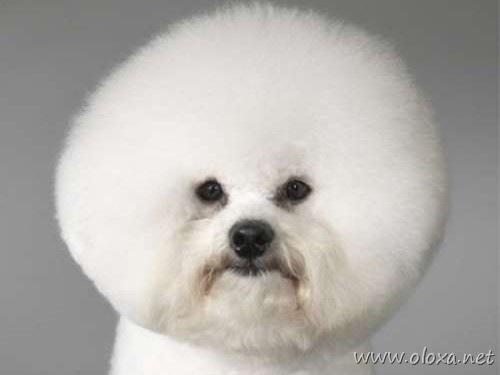 puff-dog-meme-0-e1288801150949