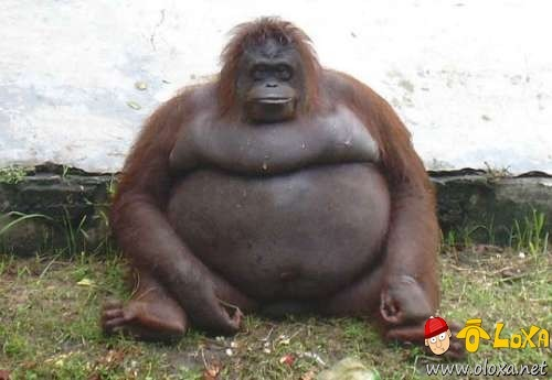 fat-animals-10