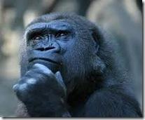 Macaco refletindo