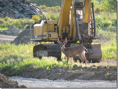 deer in park 291