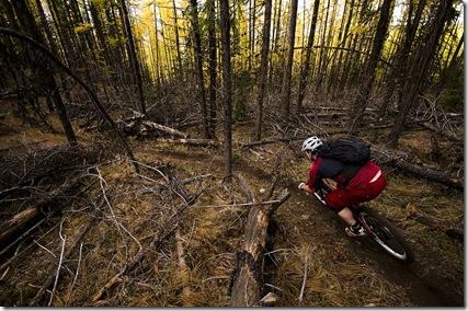 ryan forest