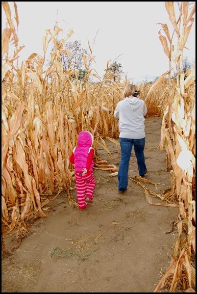 mission corn maze