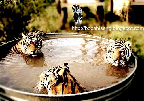foto bugil trio macan - foto telanjang trio macan