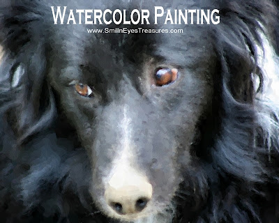 Border Collie Face Watercolor Photo Painting