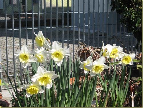 inizi primavera 012