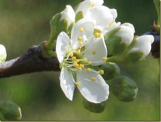 inizi primavera 016