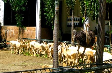 animals at baluarte