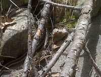 Garter Snake #1 Photo