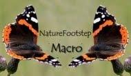 naturefootstepmacro