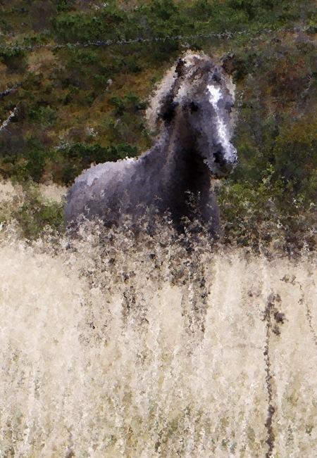hester2-etter2