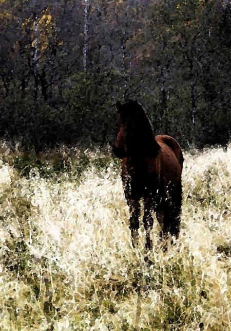 hest-maleri