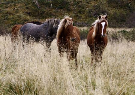 hester-førredigering