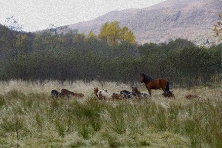 hestermorgen-redigertsponge