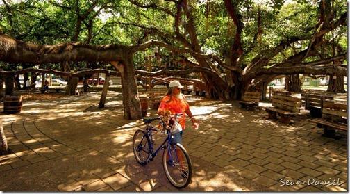 Biking under the Banyan tree