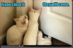 funny-pictures-cats-gather-around-closed-door