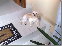 comportamiento_canino (1)