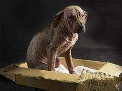 Cadela foi abandonada com uma grave doença de pele / Crédito: Reprodução/ Daily Mail